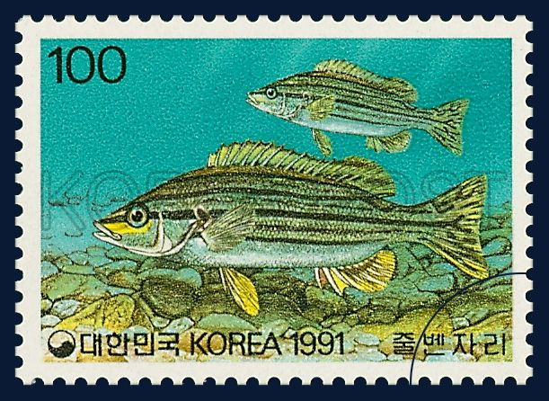 THE FISH SERIES 6, Rhyncopelates oxyrhynchus, marine life, yellow, black, 1991 06 08, 어류시리즈(여섯번째묶음), 1991년 06월 08일, 1647, 줄벤자리, postage 우표