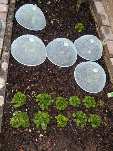 Schneckenschutz Garten Pflanzen Gemuseanbau