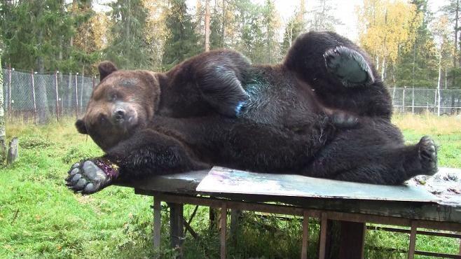 Juuso Karhu Maalaa Tauluja Kuusamossa Taiteentuntija Uskoisin Ilman Muuta Ihmisen Tekemiksi Animals Animal Painter Funny Animals