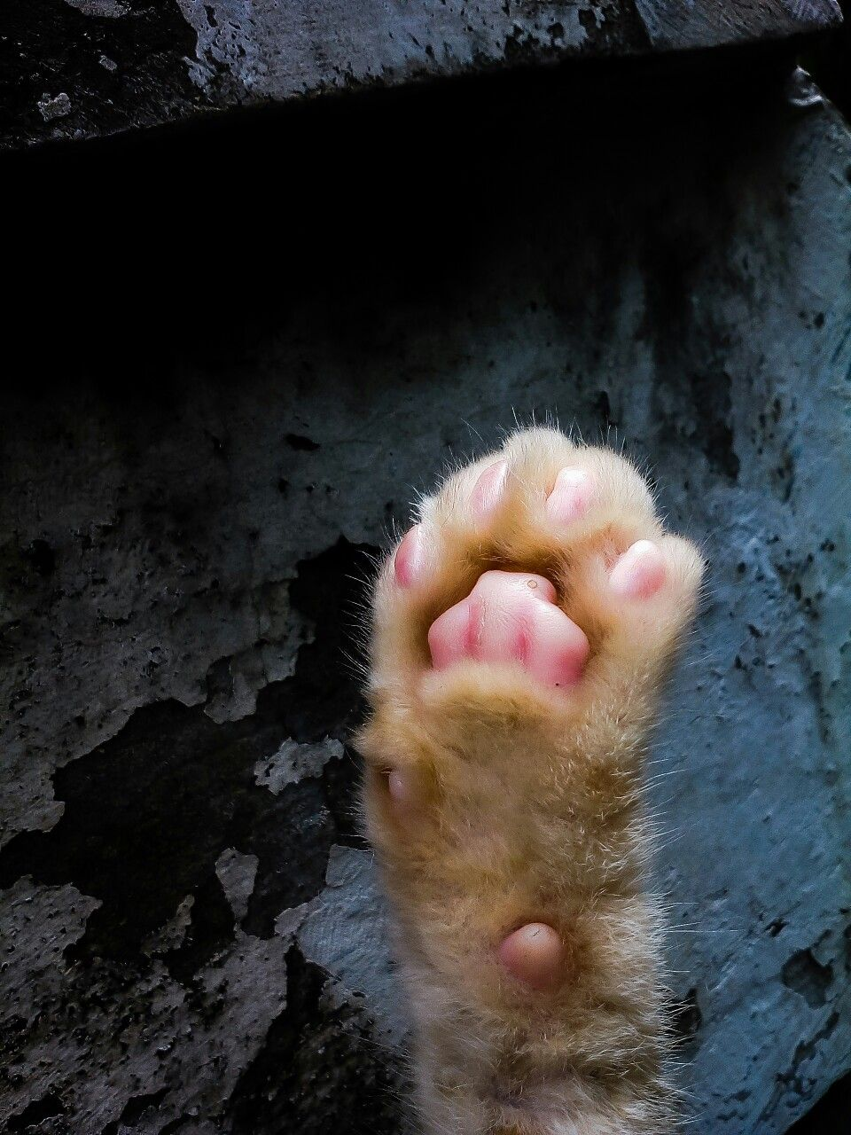 Paw Photography Cat Cats Kitten Kittens Catphotography Paw Paws Meow Catlife