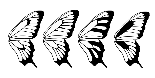 Pics For Gt Butterfly Wing Pattern Black And White Butterfly