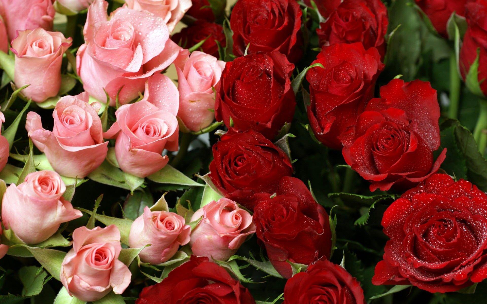 rózsa csokor wallpaper hd desktop wide | rózsák | pinterest