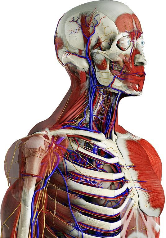 Essential Anatomy | 3D4Medical Apps | Pharm cheats | Pinterest ...