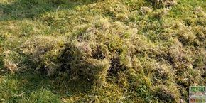 que faire quand la mousse envahit la pelouse jardinage pelouse jardinage gazon. Black Bedroom Furniture Sets. Home Design Ideas