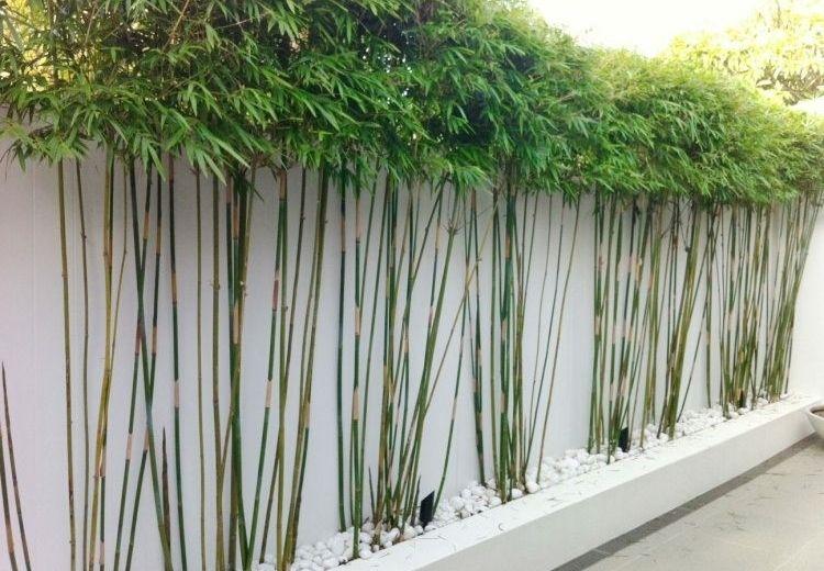 Ca as de bamb para decorar patios y terrazas ideas para patios pinterest - Jardin de bambu talavera ...