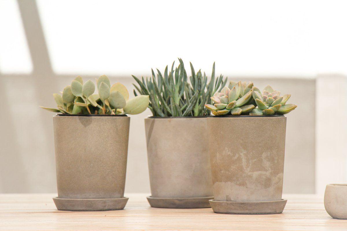 #interior #inspiration #decoration #kaktus #kakteenfamilie #urbanjungle #design #home #pflanzen #sukkulente