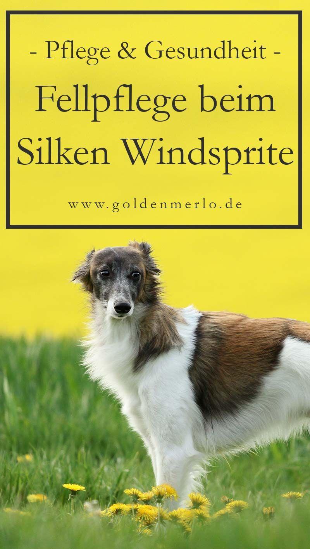 Die Fellpflege Des Silken Windsprite Hunde Pflege Und Hund Nagel