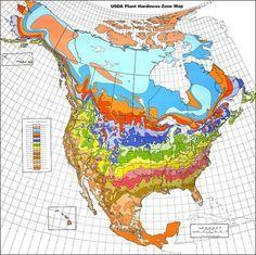 Hardiness Zone Converter Information On Hardiness Zones Outside