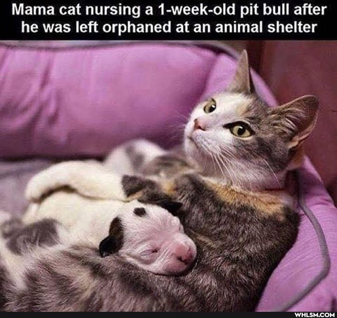 Found On Whlsm In 2020 Animals Cute Animals Mama Cat