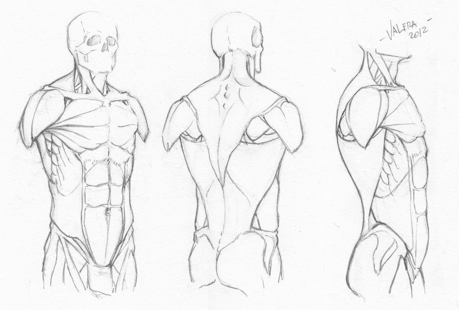 Random anatomy sketches 7 by *RV1994 on deviantART | ART: Ideas ...