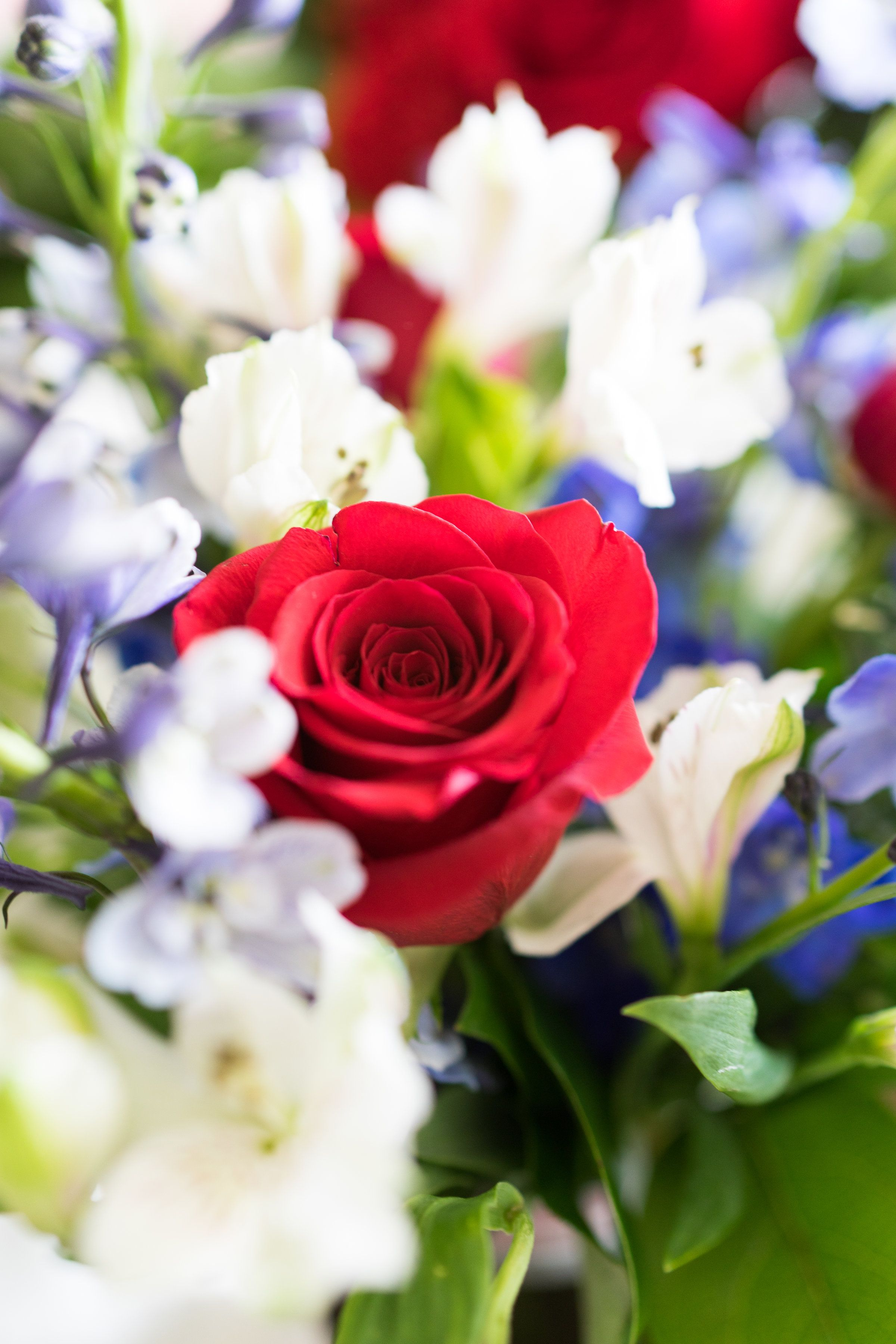 Deep red, brilliant white, and light blue flowers come