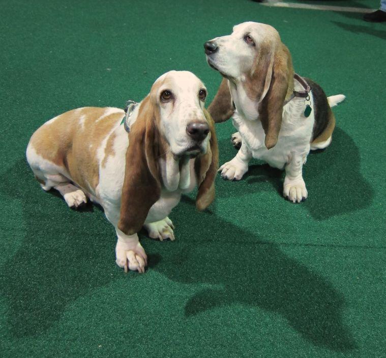 cuties Dog training, Dogs, Villa park