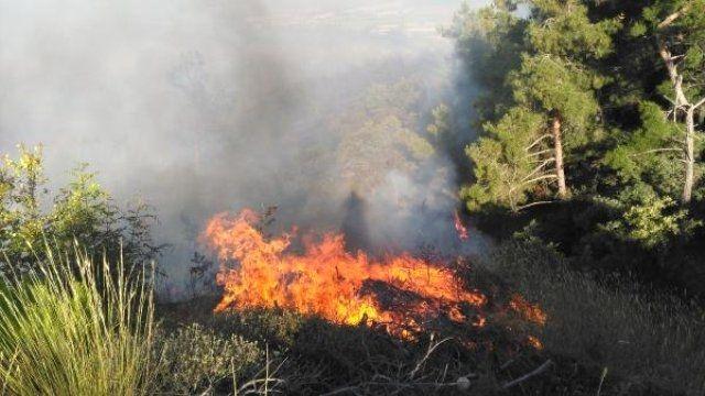 Tarlada Başlayan Yangın Ormana Sıçradı 5 hektarlık ormanlık alan yandı...