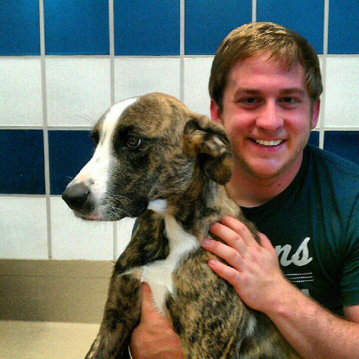 Medium Male Great Dane Puppies Louisiana