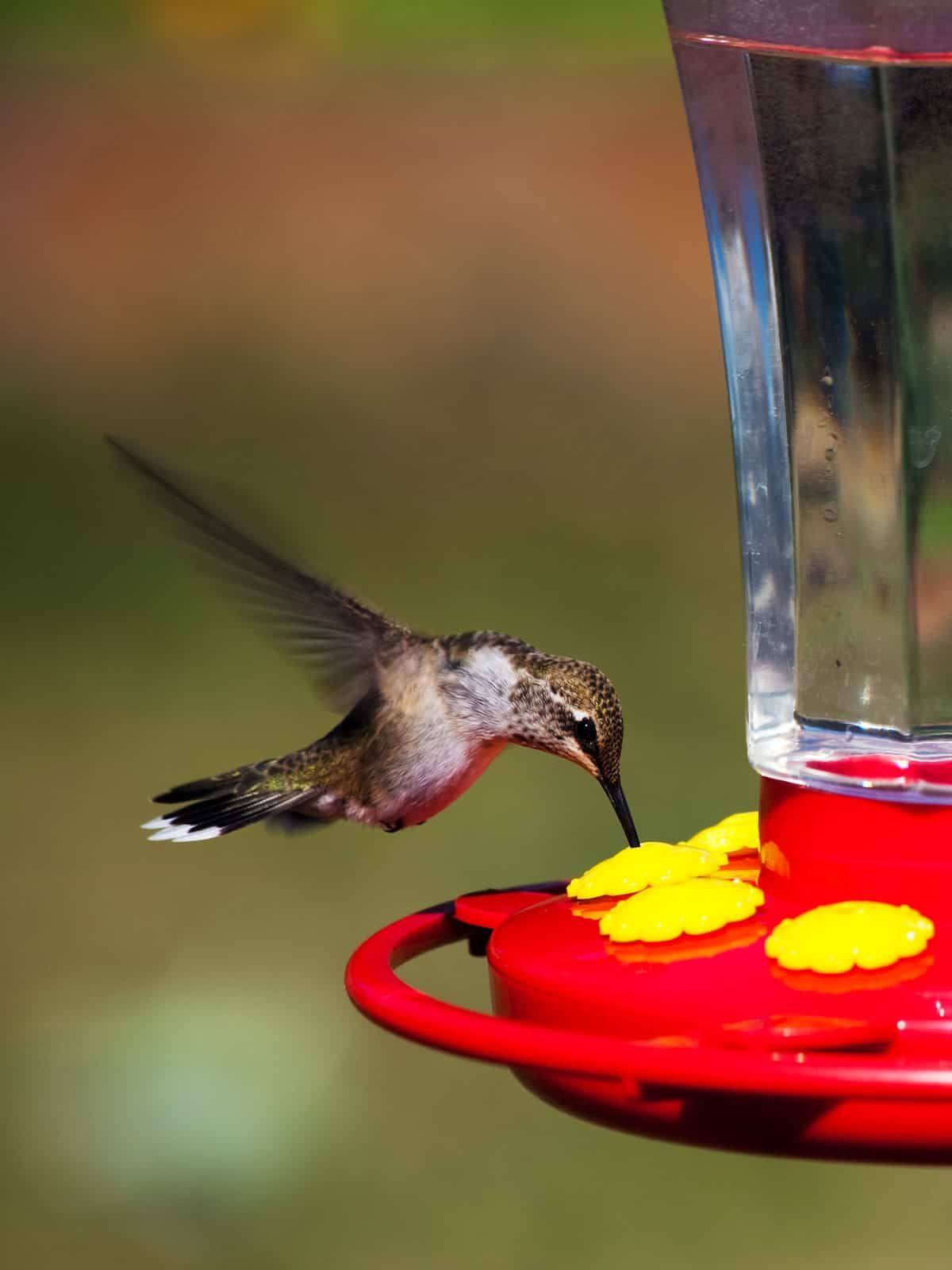 How To Choose The Best Hummingbird Feeder Reviews Tips Nectar Recipes With Images Humming Bird Feeders Hummingbird Glass Hummingbird Feeders