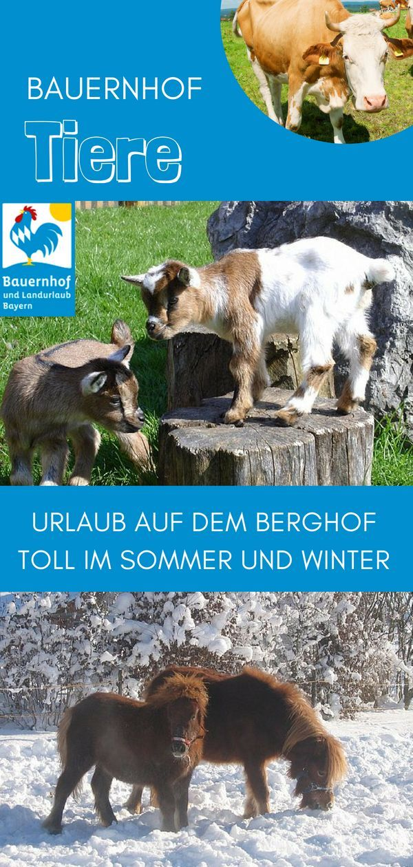 Urlaub Auf Dem Berghof Walser In Oberbayern Ist Ein Erlebnis Für Alle  Altersklassen. Kinder Werden