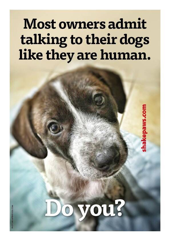 most owners admit talking to their dogs like they are human