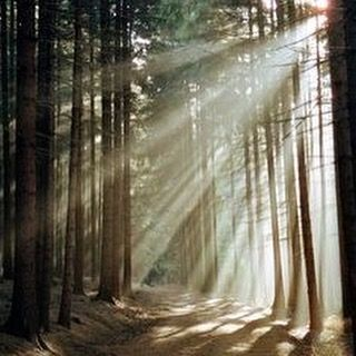 A walk to the forest  is the best gift you can give to yourself! Have you tryied it?