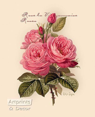 Pink Roses Art Print Rose Art Rose Painting Vintage Flower Prints