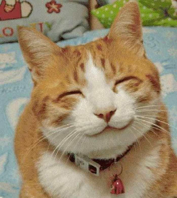 10 Gatos haciendo las mejores caras que veras en tu vida.