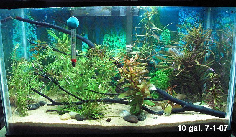 Beautiful 10 Gallon Aquascape Aquascape Aquatic Plants Fish