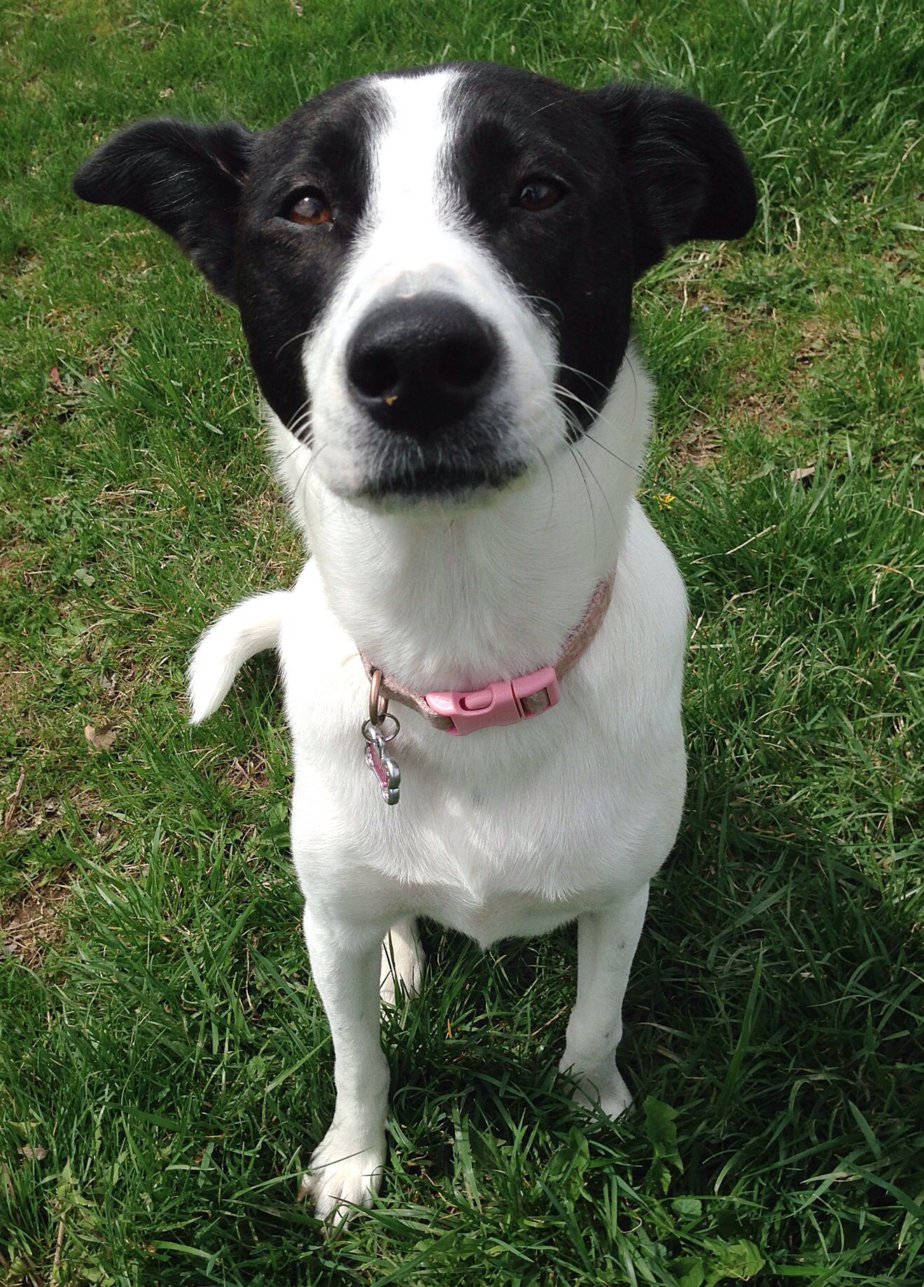 This Is My Wonderful Short Haired Border Collie Ava Mixed Breed Dogs Short Haired Border Collie Dog People