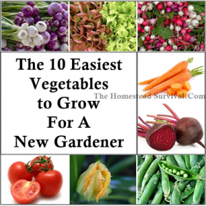 The Top 10 Easiest Vegetables To Grow For A New Gardener | Http://