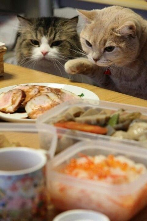 What did she make today? Homemade cat food, Kittens, Can