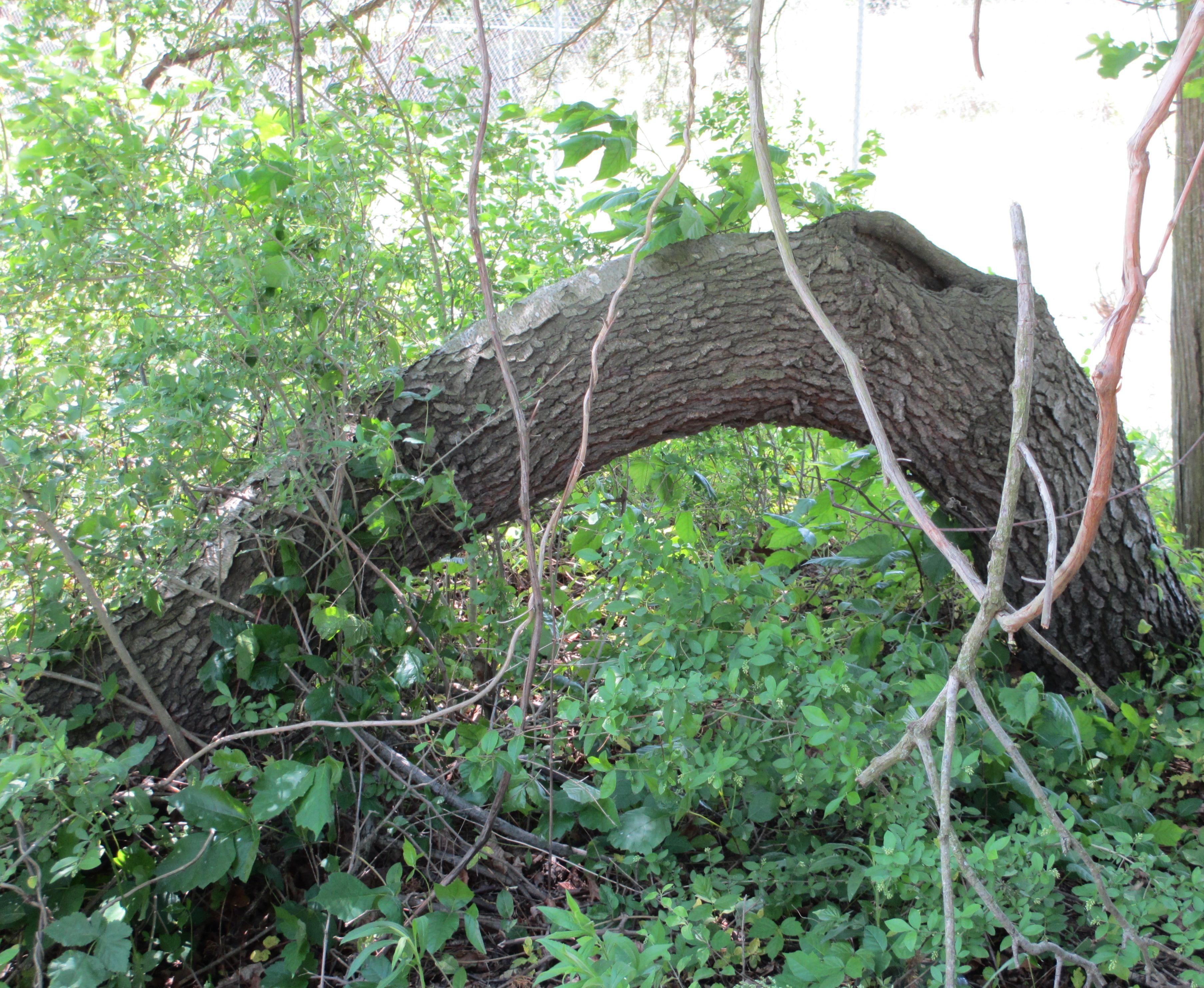 """""""loch ness monster"""" tree Garden items, Tree, Loch ness"""