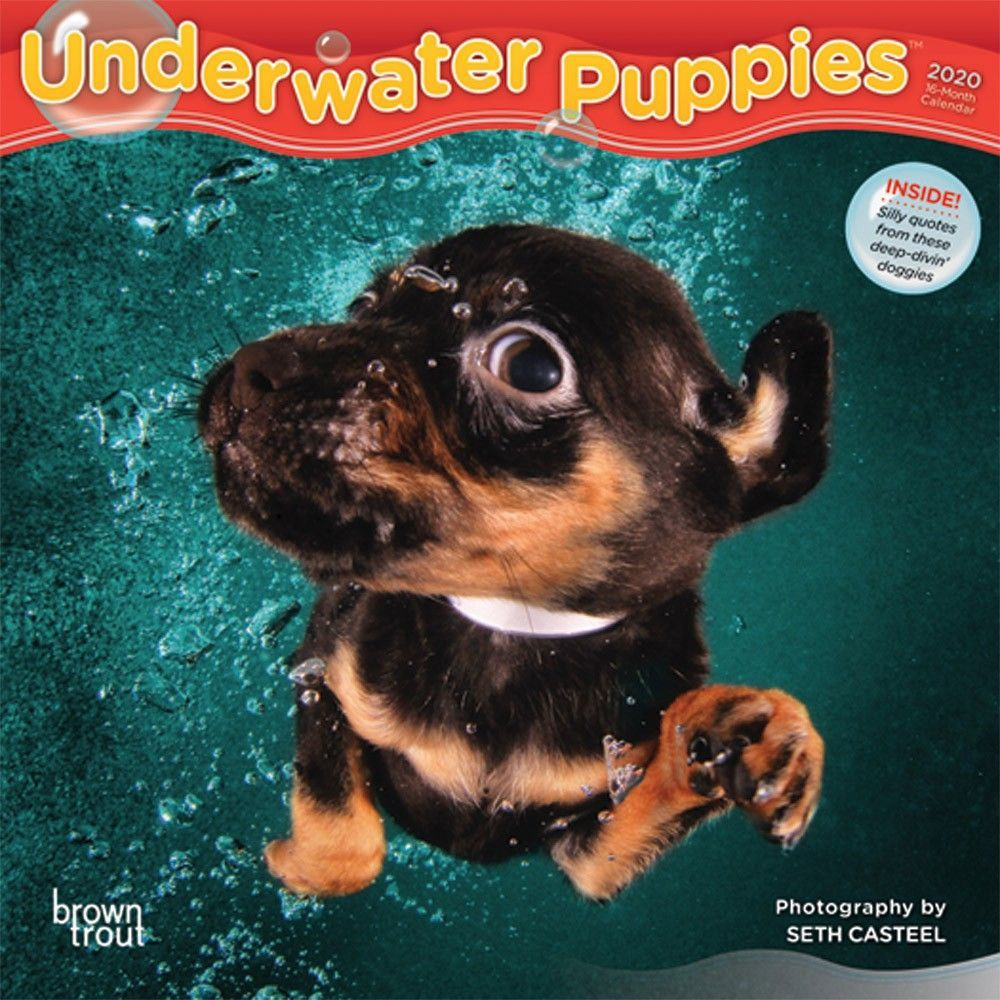 Underwater Puppies 2020 Mini Wall Calendar Dog Calendar Puppies