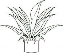 Desenho De Folhas De Plantas Para Colorir Pesquisa Google Com