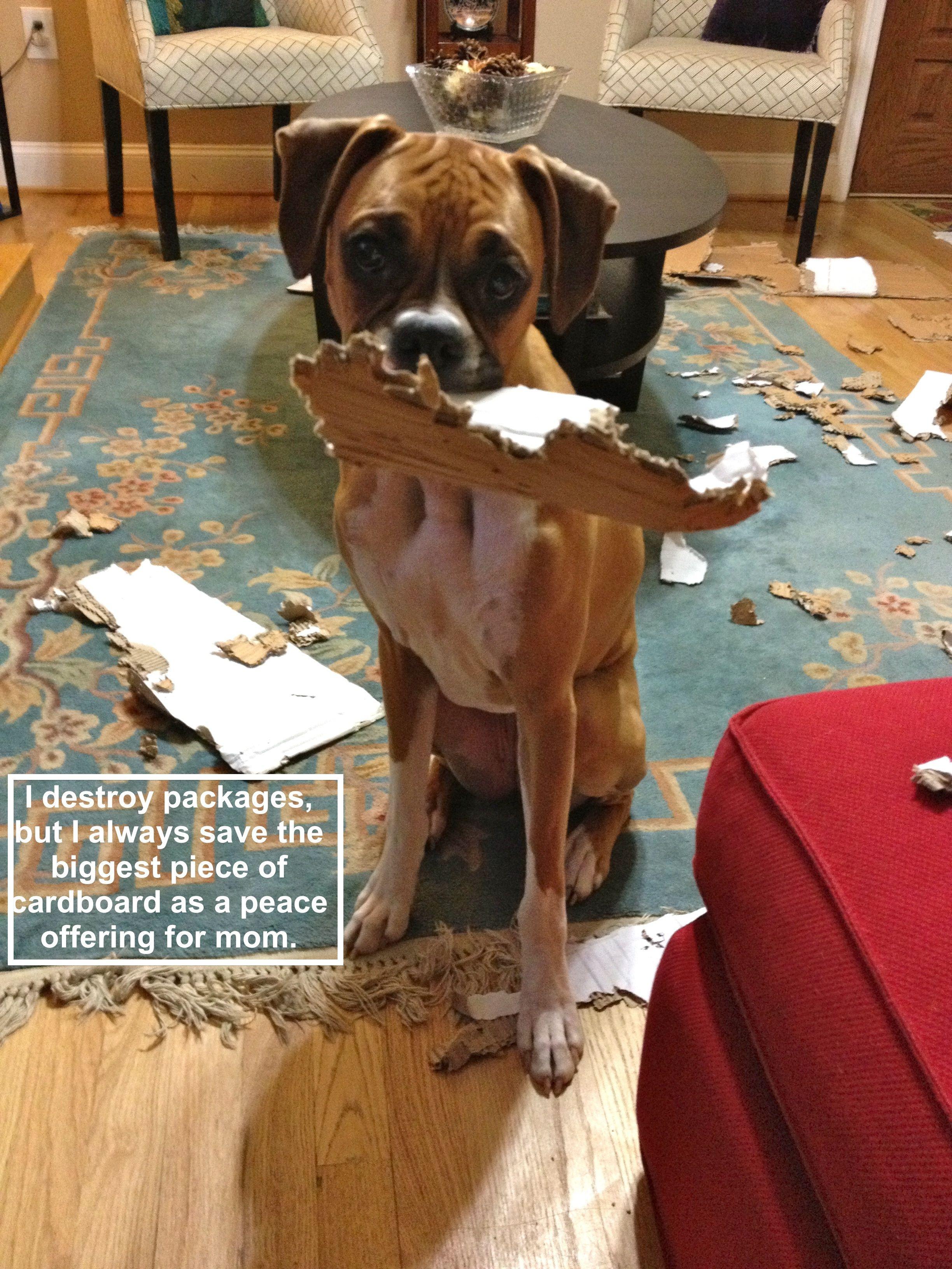 Image result for boxer dog, destroy