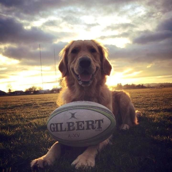 England Rugby Player Mad Dog: Rugby & ... Dog!