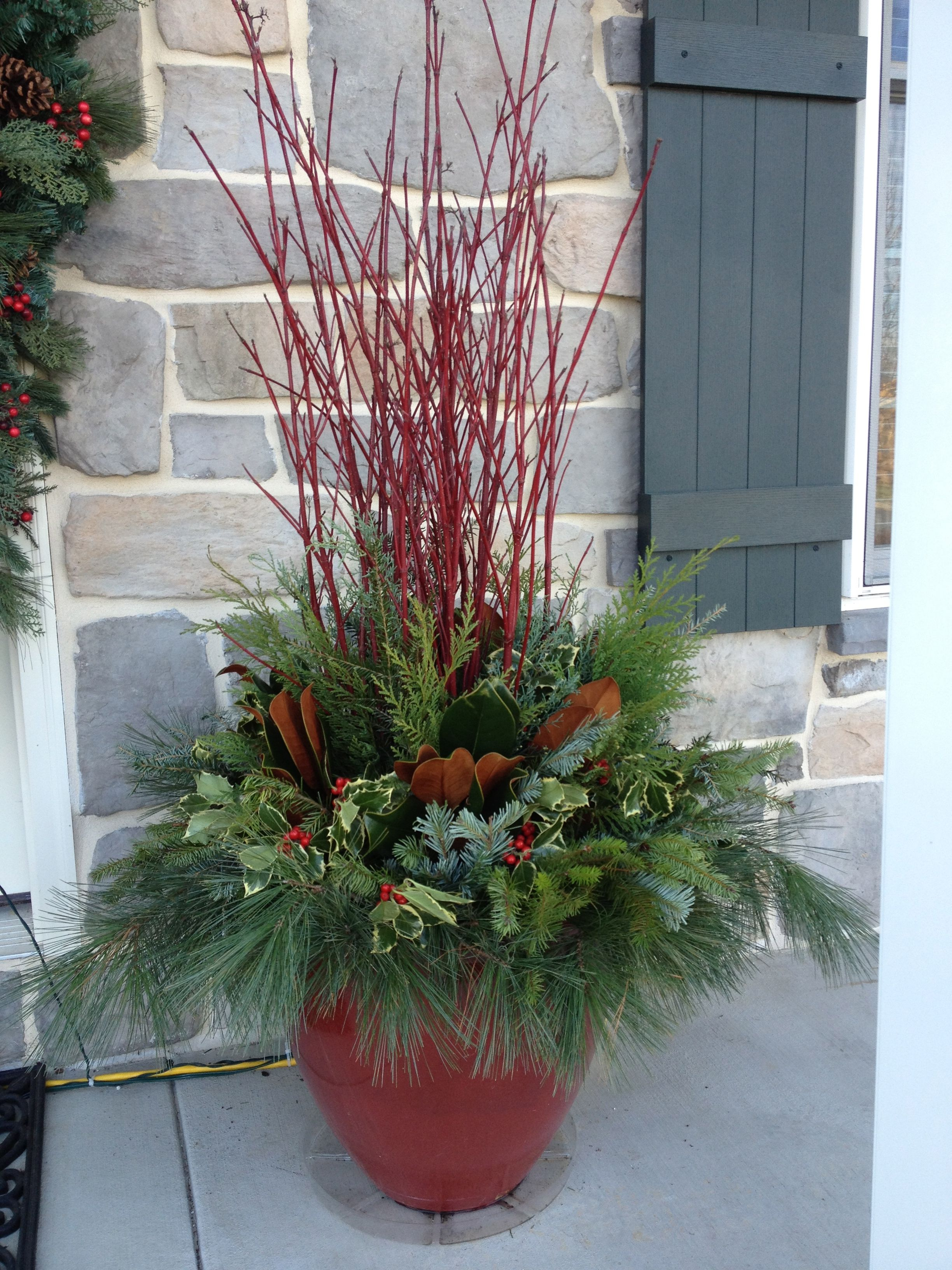 Winter, Christmas container garden, red pot, red twig dogwood, magnolia leaves, evergreen, variegated holly