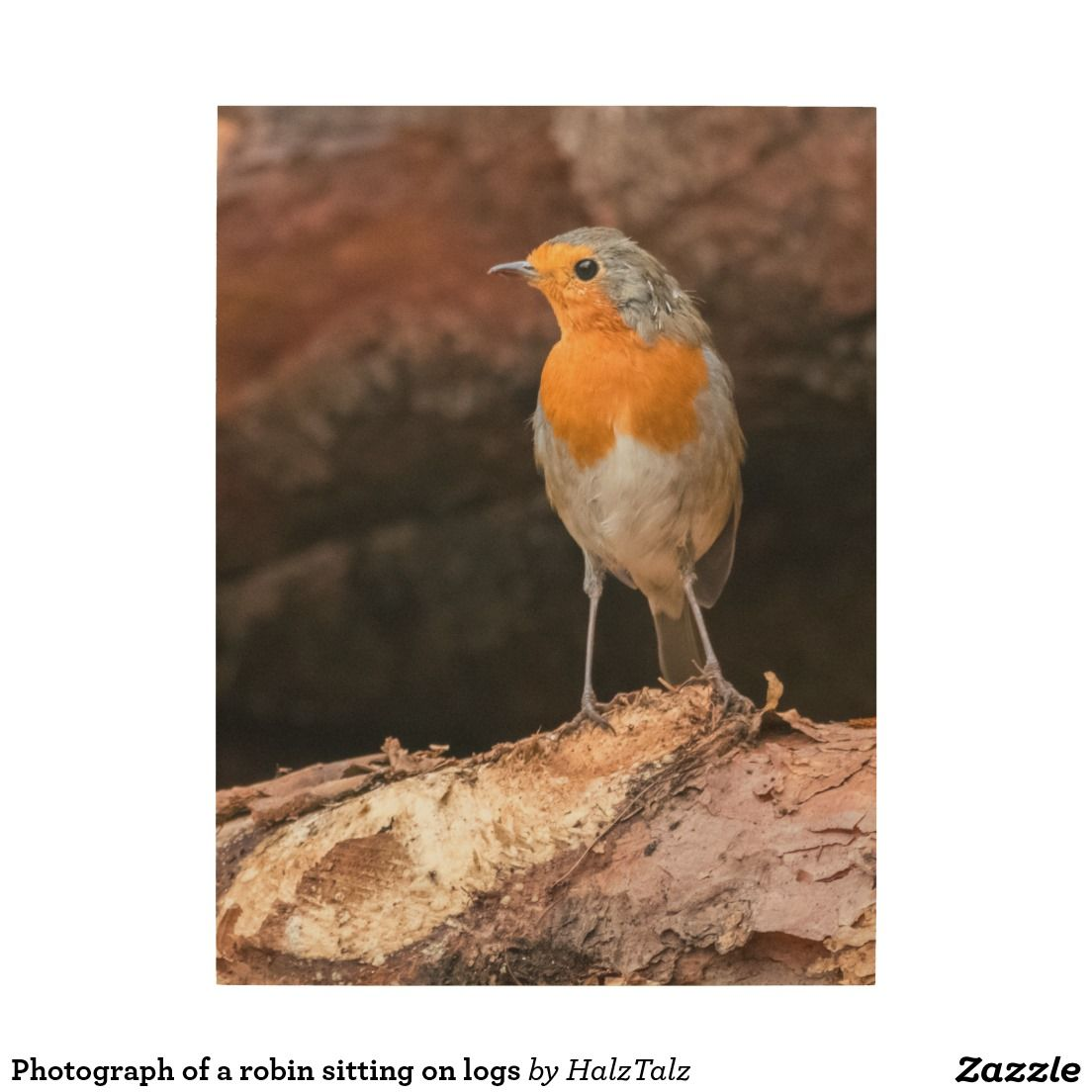 photograph of a robin sitting on logs robin bird pinterest