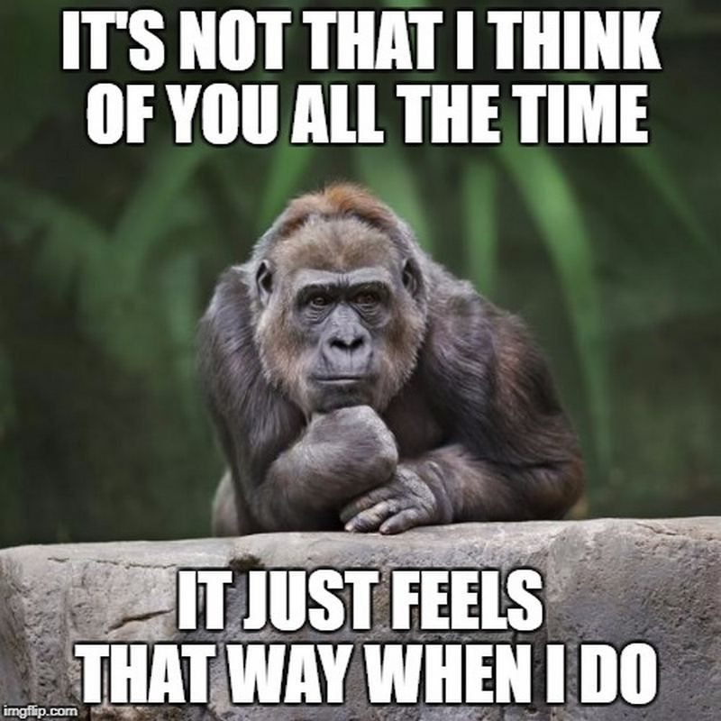 77 Funny Thinking Of You Memes For That Special Person On Your Mind Thinking Of You Quotes Good Morning Quotes Thinking Of You