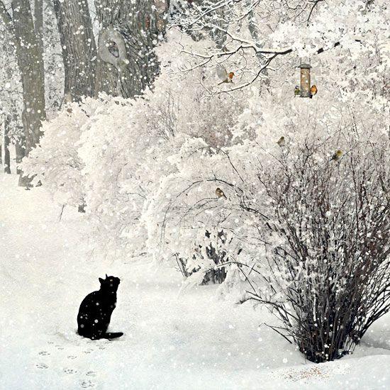 Lynx Cat Snowy Winter Scene Norway Stock Photo 371271205 ...  |Winter Scenes With Cats