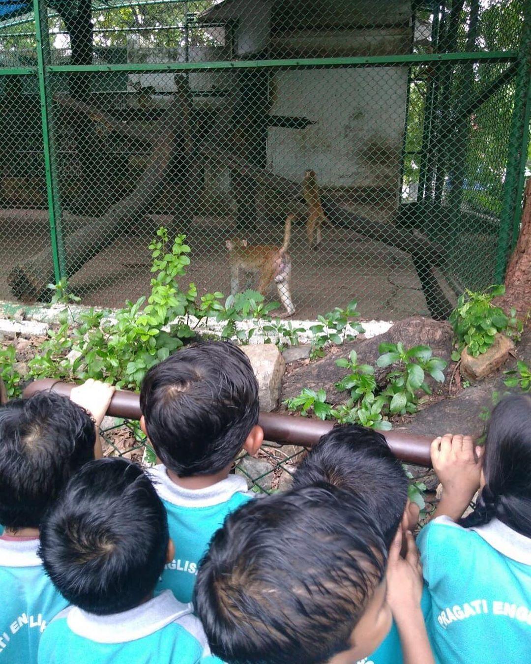 Pragati Preschool Grade Senior Kg Students Visited Kankaria Zoo