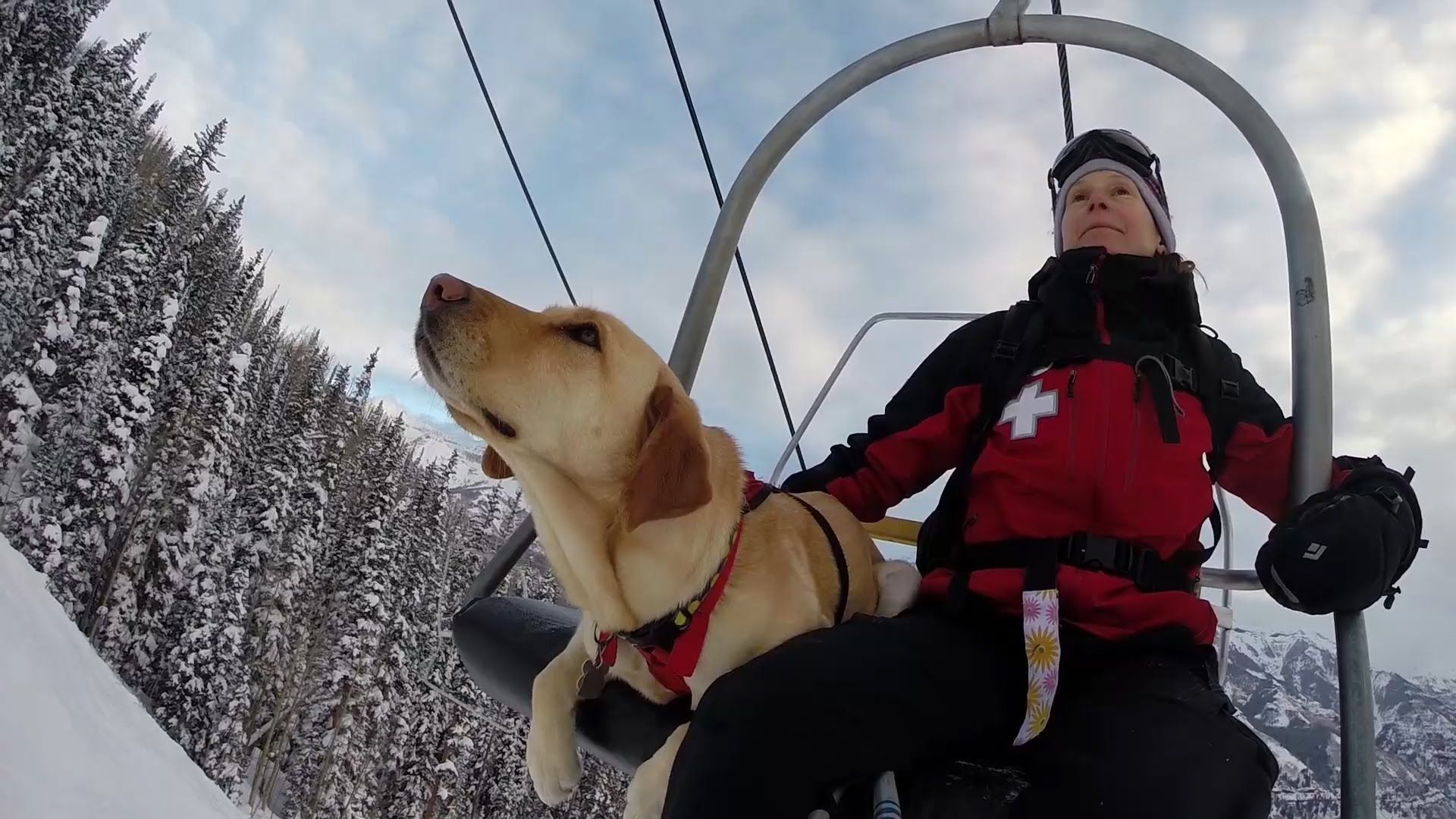 Take A Behind The Scenes Look At The Working Dogs Of The Telluride
