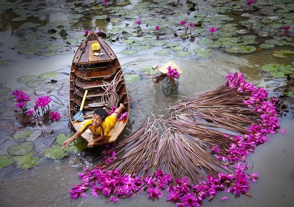Photo by © Thái Dương Lê Nhiếp ảnh, Hoa súng, Phong cảnh