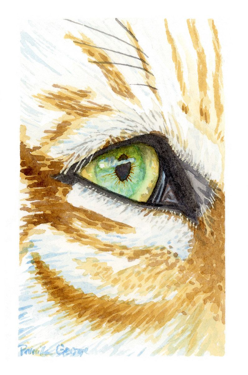 New to priscillageorgeart on etsy tiger eye watercolor art print various sizes 5x7 8x10 11x14 20 00 usd