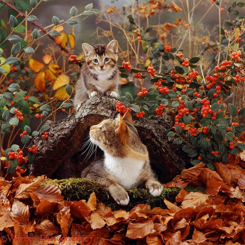Jackopaw on lovely autumn pinterest cats kittens and cats and