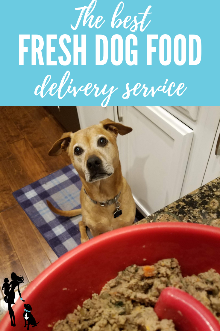 The Best Fresh Dog Food Delivery IMO Health and
