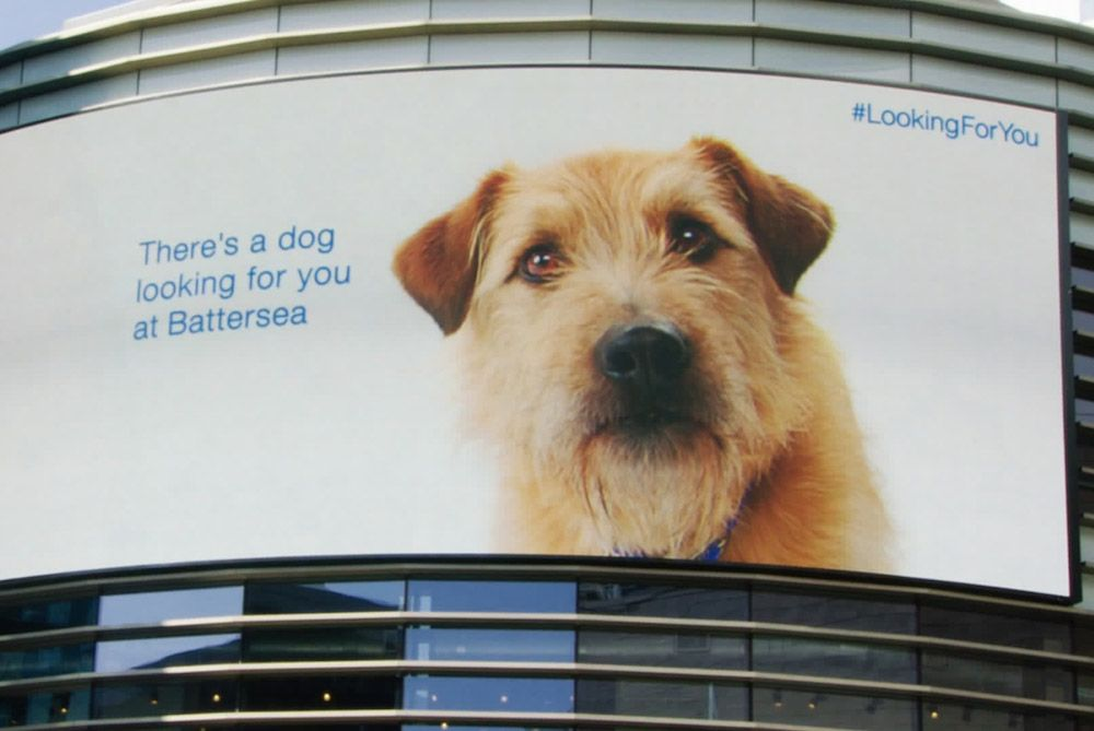 Battersea Dogs Cats Home Sent Digital Pooches To The Mall Battersea Dogs Battersea Dogs Home Dogs