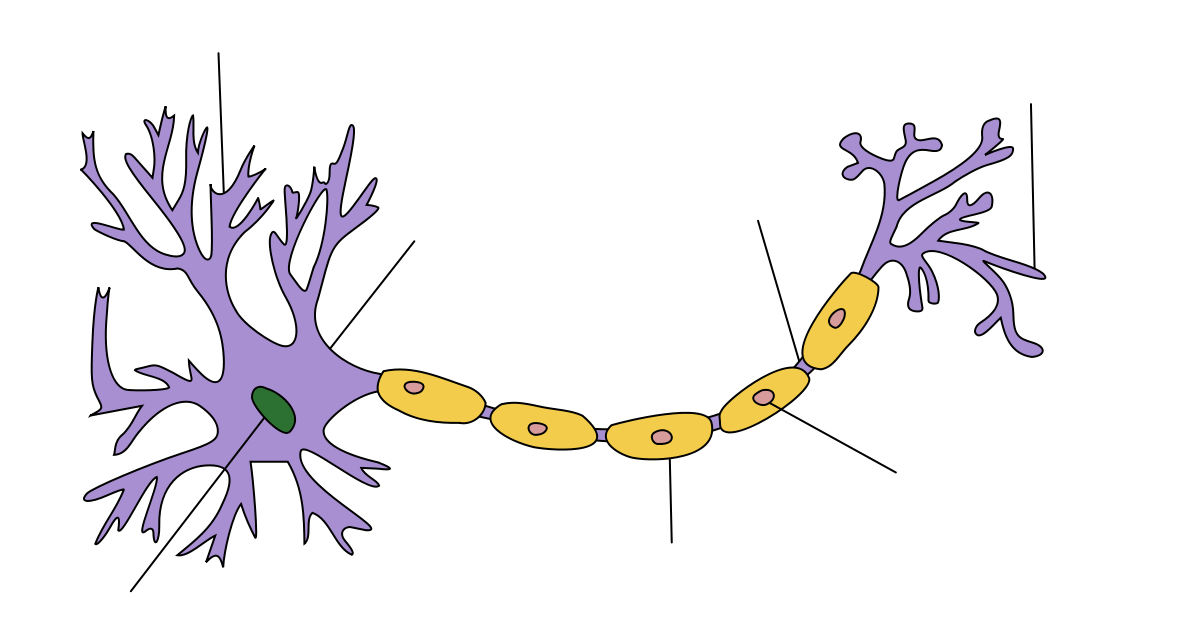 Neuron diagram blank labeling illustration of wiring diagram at one end of an elongated structure is a branching mass at the rh pinterest ie neuron communication diagram brain diagram labeled ccuart