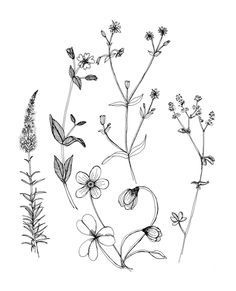 simple wildflower tattoo - Google Search