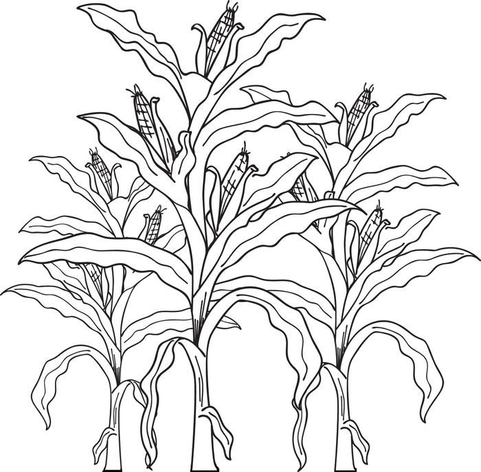 Printable Corn Stalks Fall Coloring Page For Kids Fall Coloring