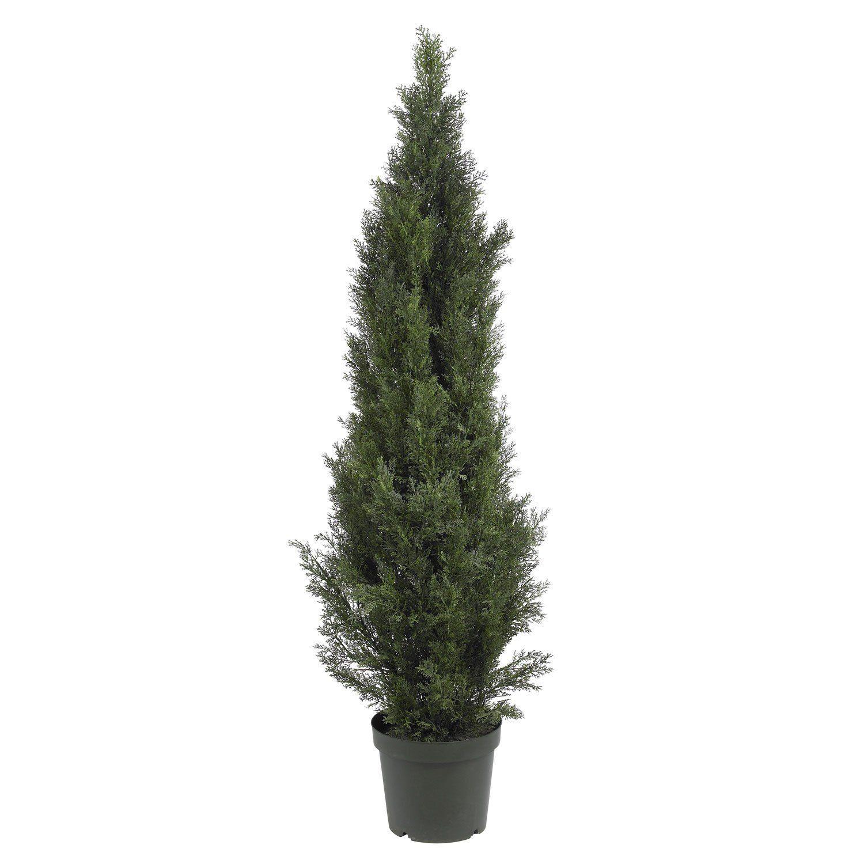 U mini cedar pine tree indooroutdoor check this awesome