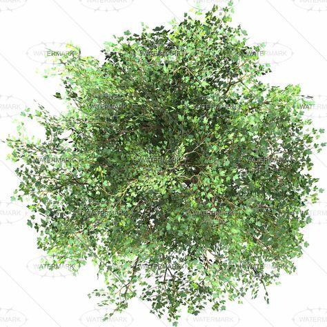 Best Plants Png Photoshop Plan Ideas Trees Top View Tree Photoshop Tree Plan Png