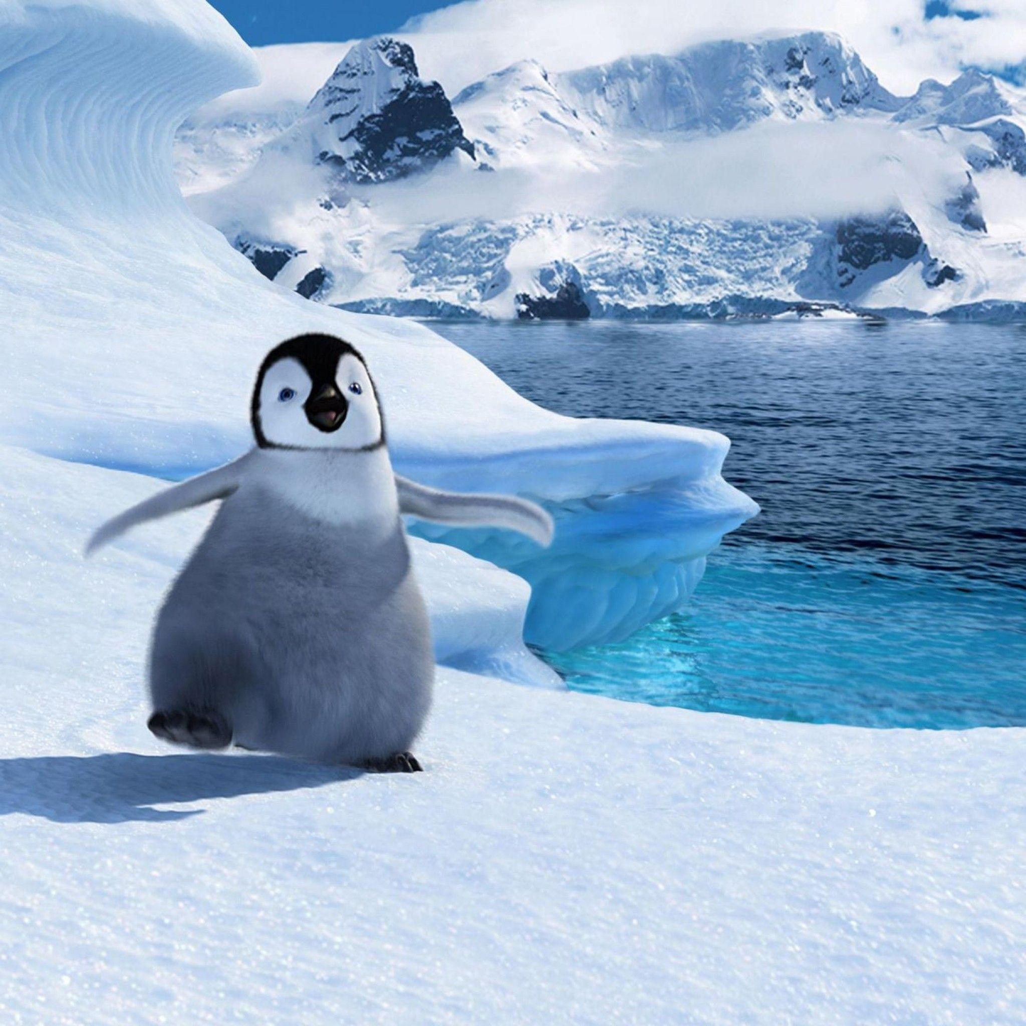 人気122位 ハッピーフィート 可愛すぎる動物 ペンギン 赤ちゃん